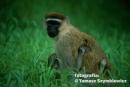 tanzania_victoria4