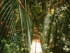 malaysia6_canopy