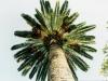 morocco_palm_tree1