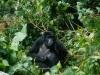 uganda_bwindi1